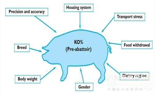 影响猪的屠宰率的因素