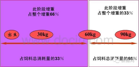 什么样的彩立方平台官网才是猪猪的好彩立方平台官网?且听南农王恬教授说!