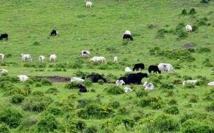 他们,正在离开畜牧养殖行业
