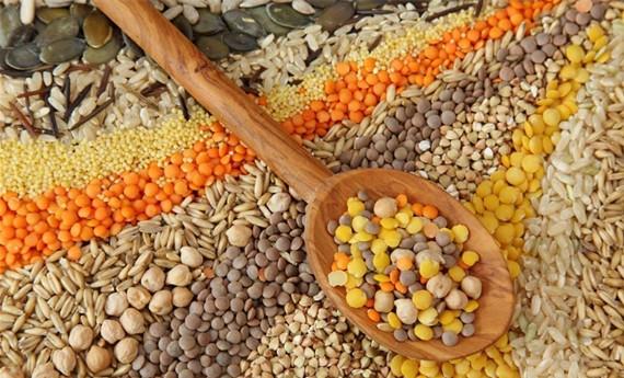 生长猪对不同谷物中淀粉的回肠末端消化率