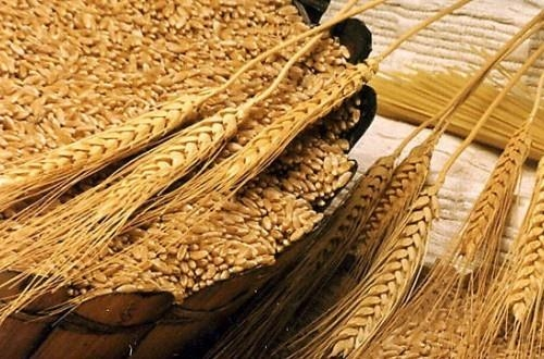 不同水平麦麸对生长猪后肠道发酵生产能量和短链脂肪酸的影响