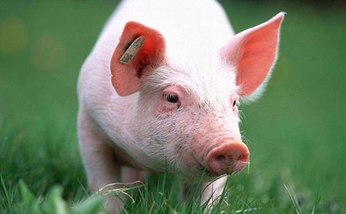 【第5期讨论】动物脂肪营养---来自彩立方平台官网交流公益平台