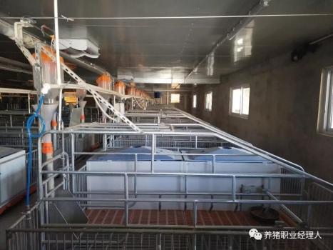 技术前沿 | 15万头线高效猪场规划设计(1)