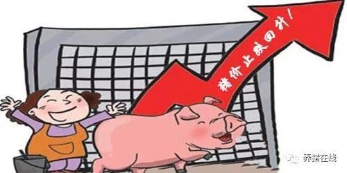 猪价企稳反弹 投资良机恐未至