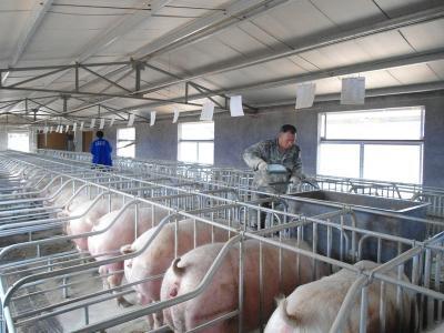 种母猪舍建造的5点实用技术要求