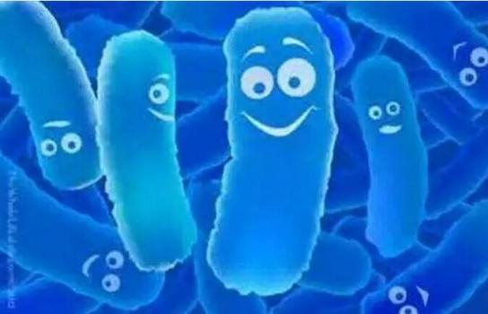 益生菌对哺乳仔猪生产性能及胃肠道生理状态的影响