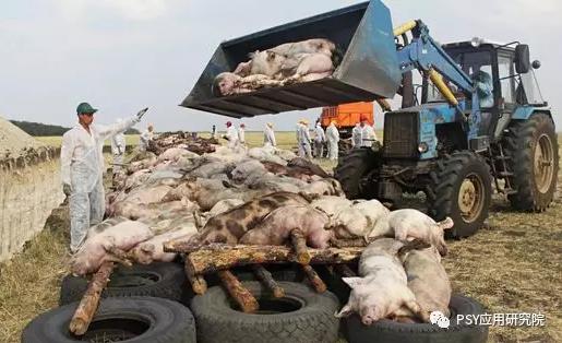 能对抗非洲猪瘟病毒的只有这一种物质