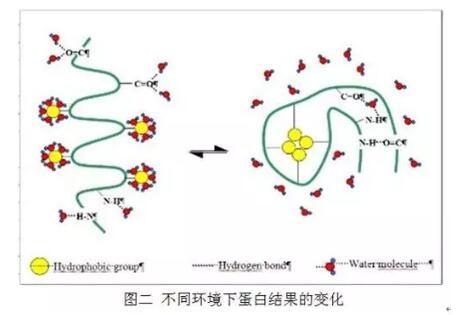 酸溶蛋白能否用来判定发酵豆粕中的小肽含量?【三】