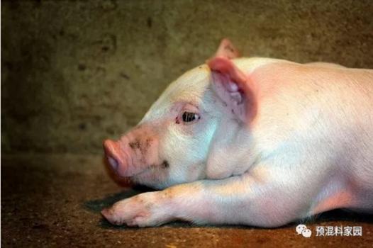 适口性对猪必赢登录利用率的影响