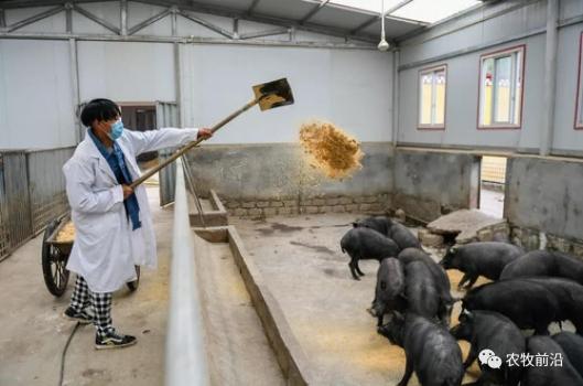 新华社五问猪肉价!供应紧张何时解?中央、地方如何应对?