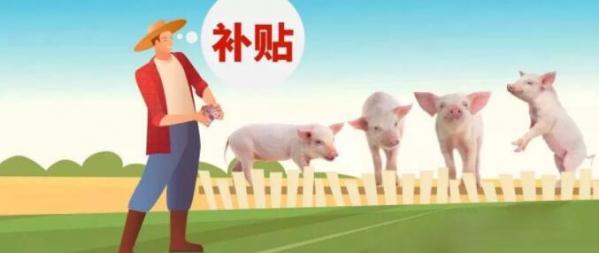 2020养猪补贴新政:养50头猪国家就有补贴