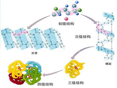 蛋白质在猪体中的作用及添加量