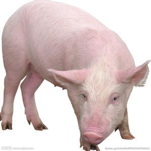 全脂米糠和脱脂米糠对断奶仔猪生长性能和血液指标的影响