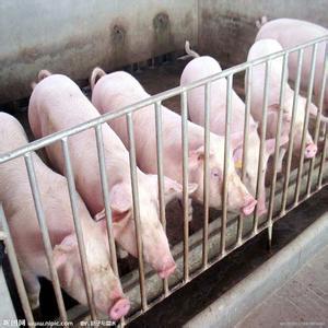 猪流行性腹泻病毒或猪德尔塔冠状病毒攻毒对保育猪的生长性能和组织沉积的影响