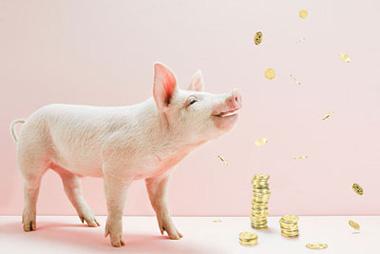 13kg和50kg猪对日粮脂肪消化能、代谢能和净能含量的影响