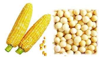 甲基盐霉素对玉米豆粕型或玉米豆粕DDGS型日粮能量、养分、纤维消化率的影响