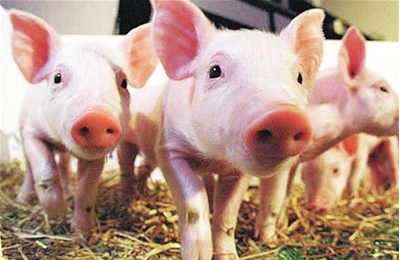 农业部公布2017年畜禽养殖标准化示范场名单 574家企业上榜!