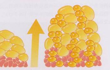 脂肪组织应答反应揭示了脂肪生成在猪适应热应激过程中的重要作用