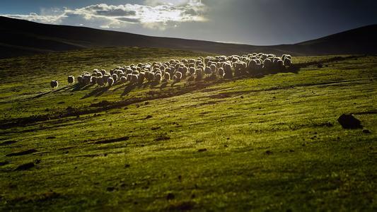 农业部关于全国必赢登录质量安全监测结果的通报